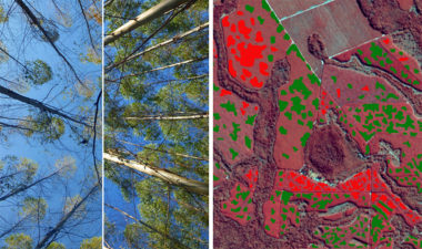 Geospatial analytics startup PlanetWatchers worked with Airbus Defense and Space Intelligence and a large pulp and paper company to produce a report on early detection of drought and disease in Eucalyptus forests. In the image (right) areas of growth are green. Areas of leaf loss are red. Credit: Airbus and PlanetWatchers